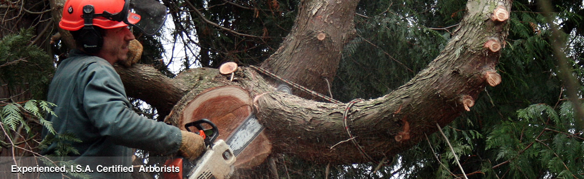 From Tree Removal to Tree Disease Treatment – We've Got it Covered