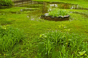 Wet lawn in need of landscape drainage, chappaqua ny