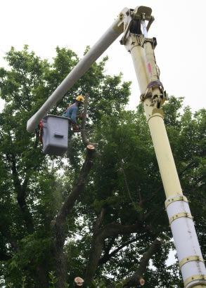 Tree removal - Westchester NY.