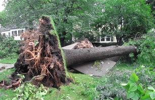 When a tree stump grinder won't cut it.