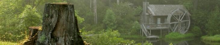 tree stump removal chappaqua ny