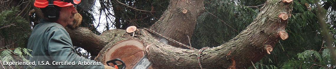 tree removal Chappaqua NY