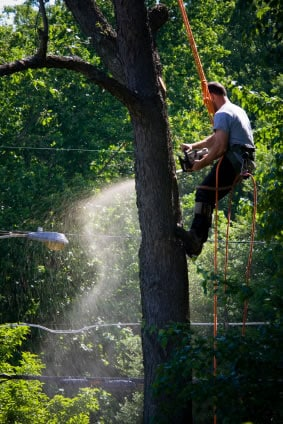 Tree removal in Westchester NY