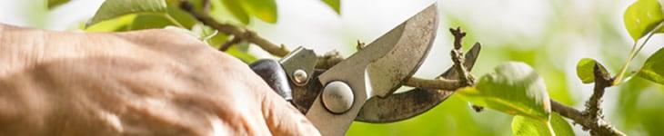 tree pruning chappaqua ny