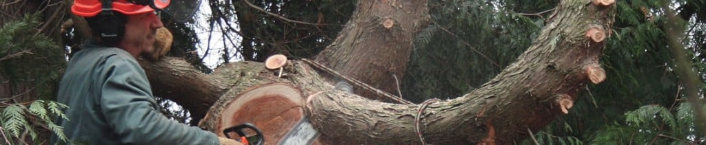 Tree Removal Services - Westchester NY