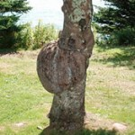 Tree Growths — Cankers, Burls, Mushrooms, Diagnosis & Treatment